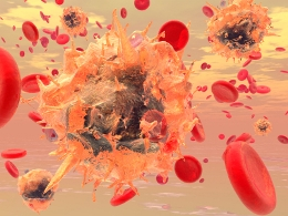 pictures of the immune system